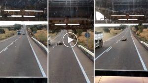 accidente ciervo grabado en vídeo
